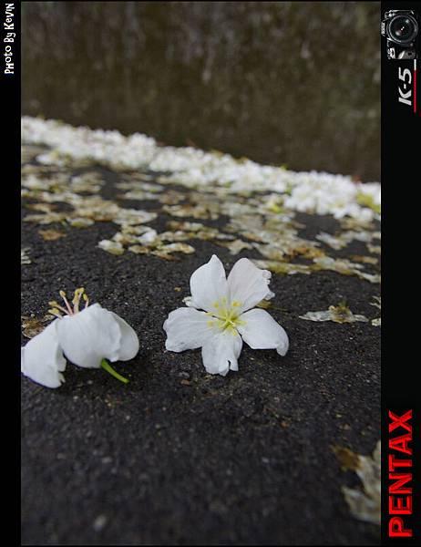 KEVI3693.jpg