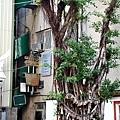 台南孔廟府中街特色小店 綠屋 02