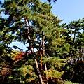 05-京都 京都御所  039