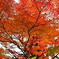 05-京都 京都御所  091