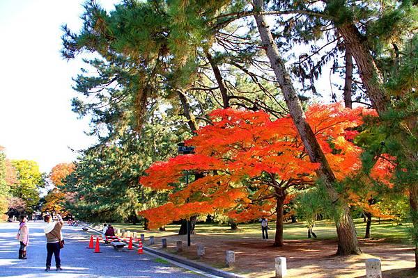 05-京都 京都御所  105