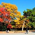05-京都 京都御所  114