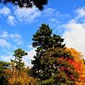 05-京都 京都御所  127