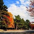 05-京都 京都御所  130