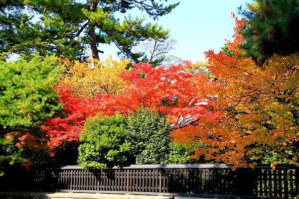 05-京都 京都御所  133
