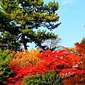 05-京都 京都御所  134