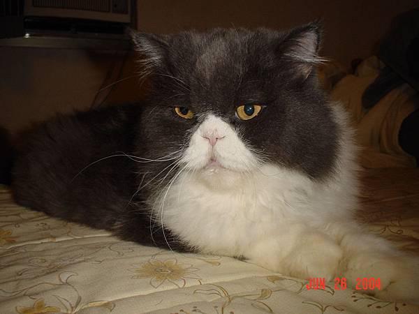 kiki貓