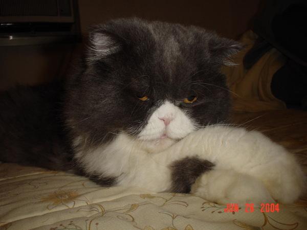 可愛慵懶的KIKI貓