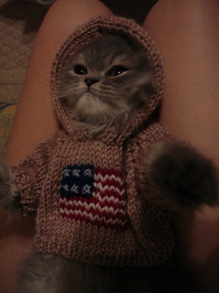 穿美國國旗的喵喵