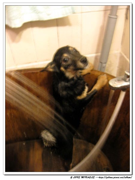 不要~~不要~~~我~~不~~要~~洗~~澡~~~(壞姐姐還用水沖沖沖~~~)
