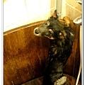這次是洗澡最乖的一次,居然乖乖地給我站好好的~~