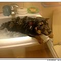 這次洗澡,居然是乖乖地泡在裡面