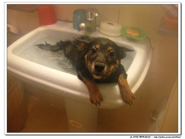 上次是拚了小命都要跳下這洗手台的呢~