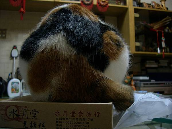 Catsbutt Mt.