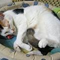 喵喵和牠的愛窩