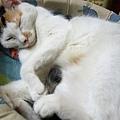 喵喵整天都在睡覺