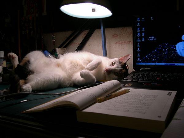 干擾主人唸書