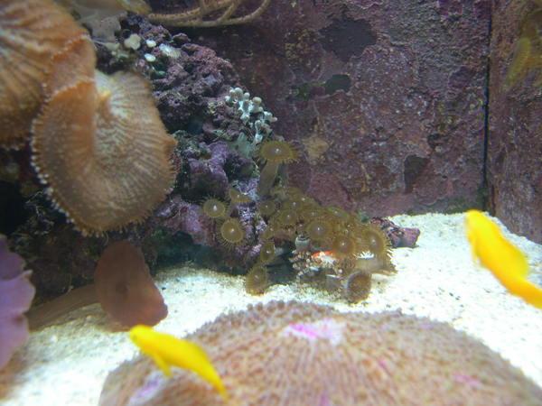 自以為躲起來的螃蟹