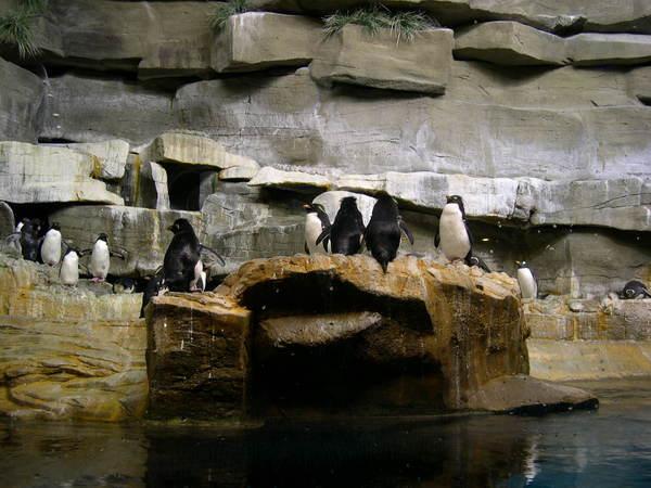 來到企鵝館