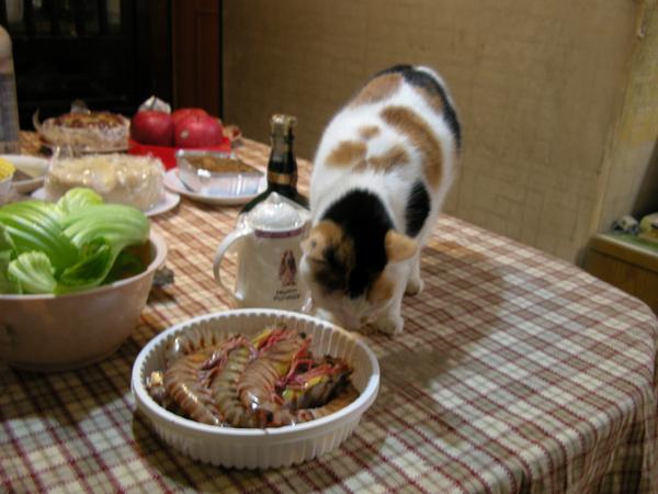Meow-moew確實地在檢查明蝦新鮮度
