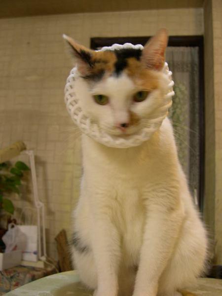 stylish meow