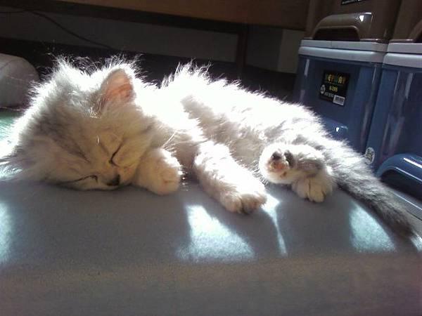冷冷的冬天,睡在陽光下,一定很舒服吧!.jpg