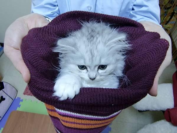 毛帽貓.JPG