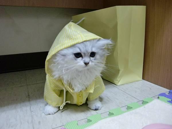 雨衣貓.JPG