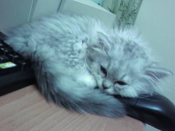 咦~~~滑鼠變成小米的枕頭了嗎!.jpg