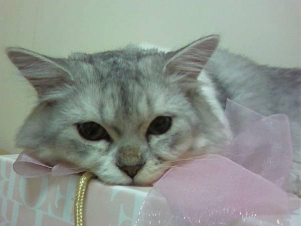 鍾愛喜餅盒的Gimi~.jpg