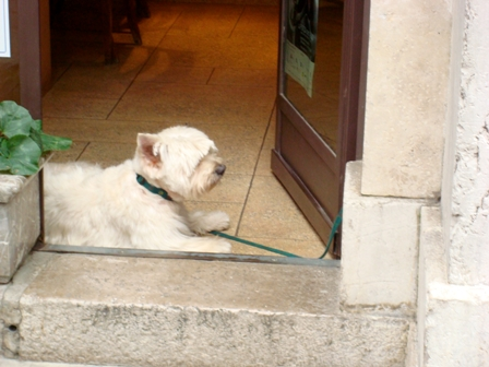 DSC02455R__Westie_in_doorway.jpg