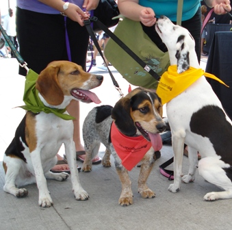 Woofstock_b__3_dogs_with_bandanans_2008_015R.jpg