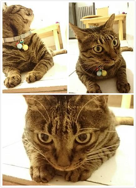 貓兒.jpg