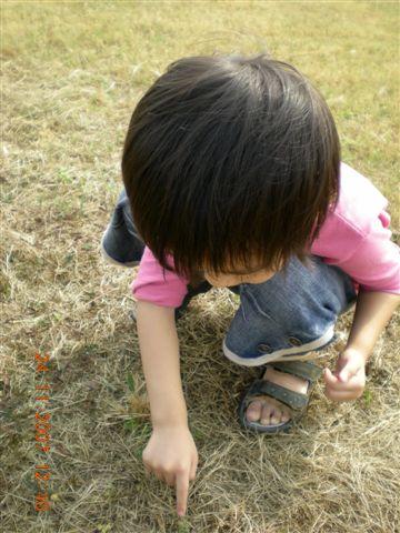 妹玩含羞草