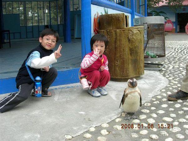 與企鵝合照