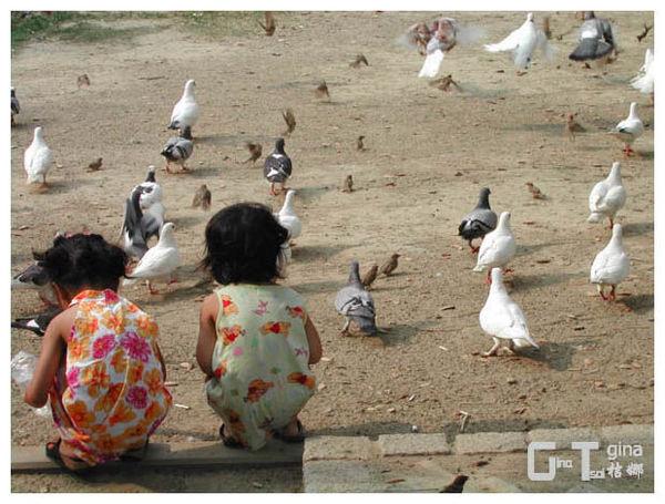中市美術館公園童餵鴿
