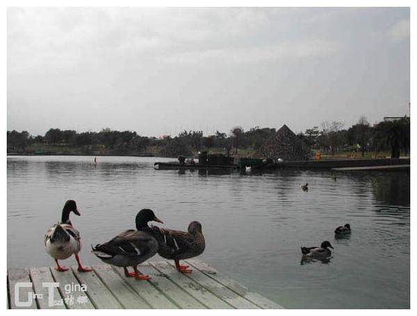 宜蘭羅東冬山河公園景