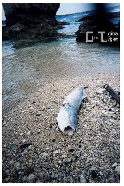 小琉球海攤魚相