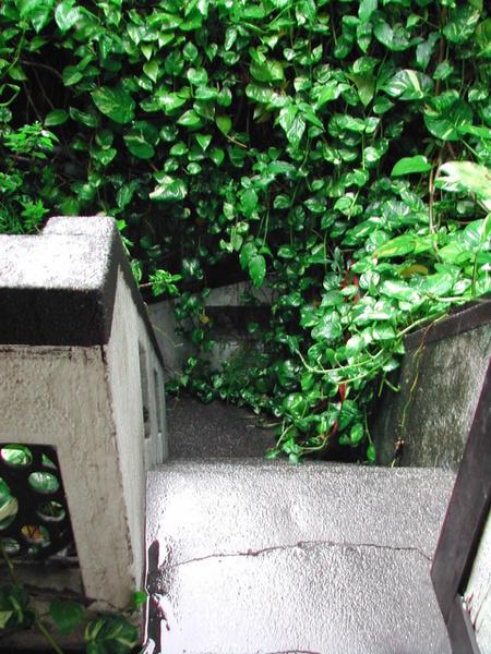 自二樓窄門望上樓處