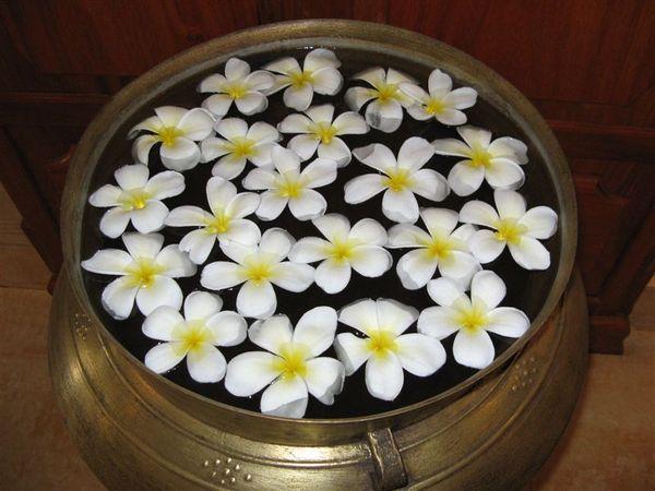 白瓣黃心飄香的雞蛋花