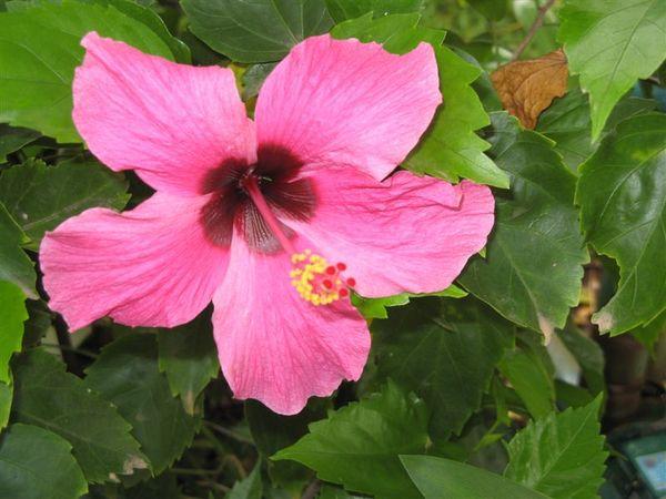美麗的浮桑花