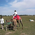 南山牧場騎駱駝