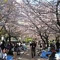 周日下午的鶴舞公園