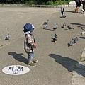 小孩與鴿子