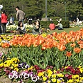 百花盛開的鶴舞公園