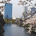 延著大阪城外圍走,有很多美美的櫻花可看。
