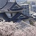古城配櫻花,好風雅喔!