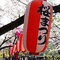 櫻花祭開鑼了~