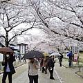 下雨了啦!日本氣象廳預測的也太準了,說下就下。