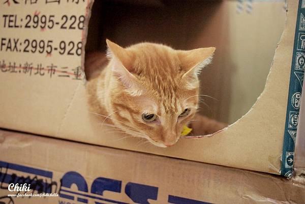 貓家好箱子+DIY貓貓屋